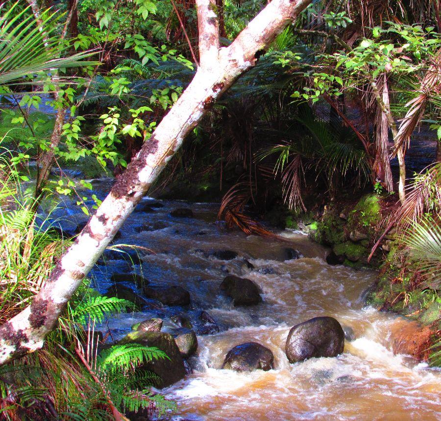 Rivière en aval de la cascade de Piha