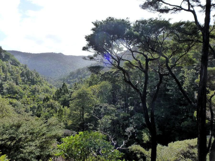 Cime des arbres, Piha