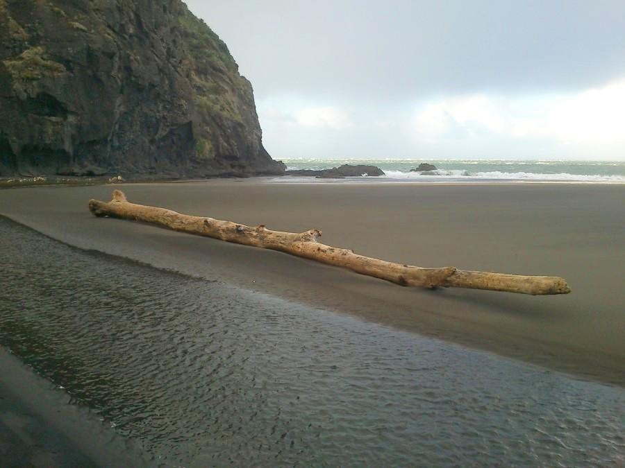 Bois flotté - plage de Whatipu