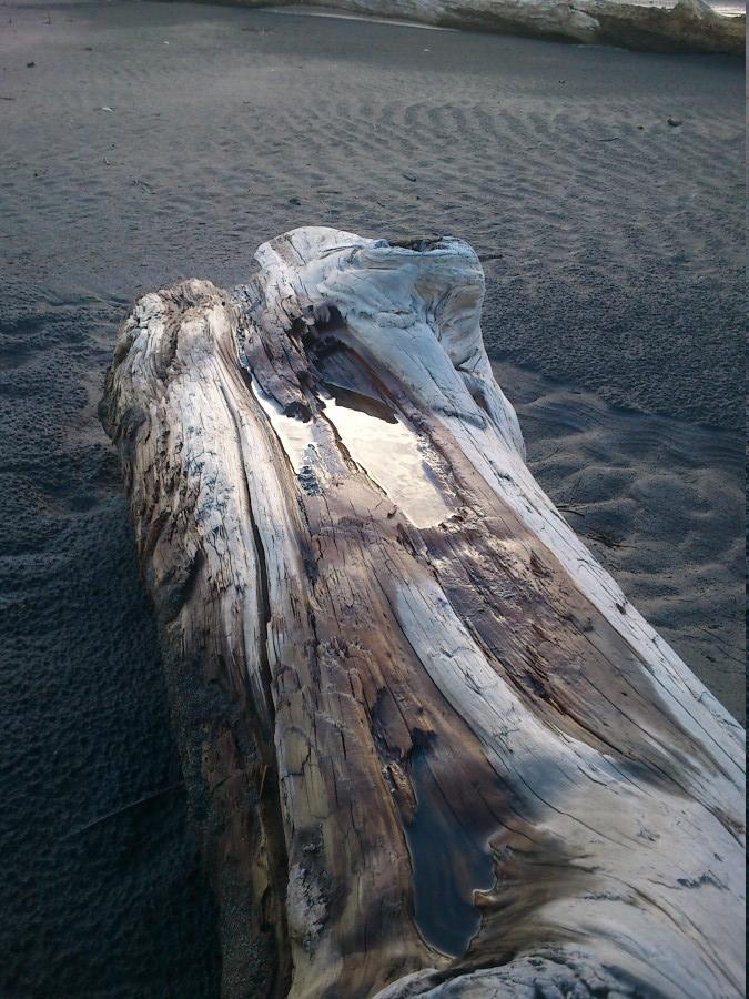 Eau sur bois flotté - plage de whatipu